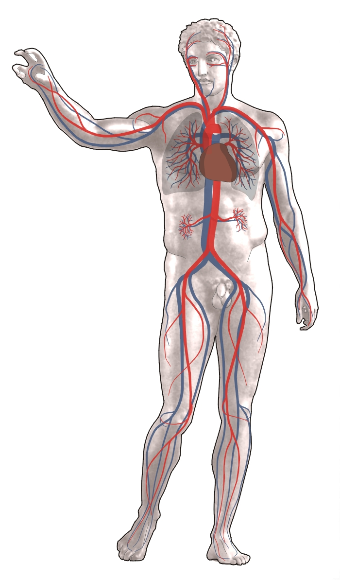 an analysis of the development characteristics problems and their solutions of the circulatory syste Characteristics of living organisms the circulatory system structure and function of the heart fetus development birth sex hormones the blood pressure in the systemic circulation is kept higher than that in the pulmonary circulation.
